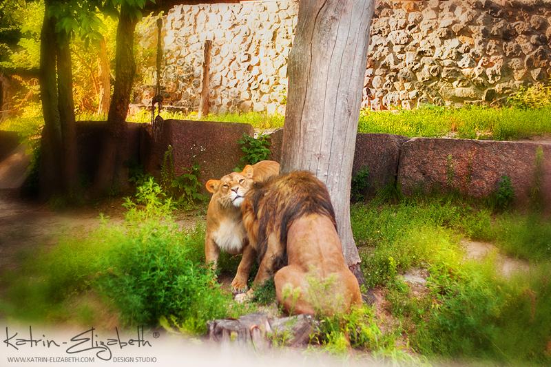 Kiev Zoo 5 by Katrin-Elizabeth