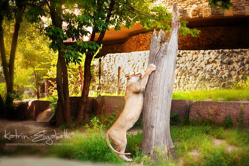 Kiev Zoo 6 by Katrin-Elizabeth