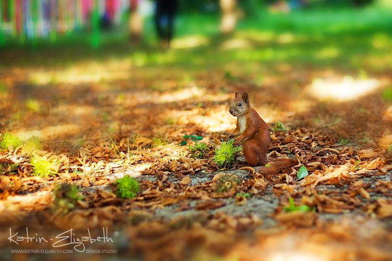Squirrel by Katrin-Elizabeth