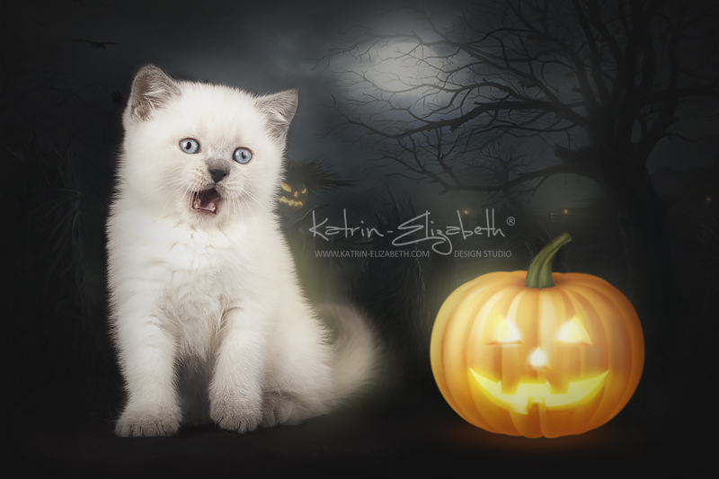 Happy Halloween! by Katrin-Elizabeth