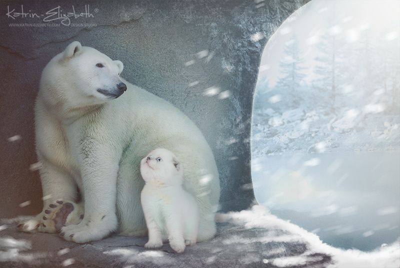 Polar Bear by Katrin-Elizabeth
