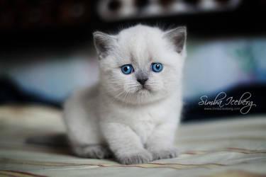 The saddest kitten in the world :) by Katrin-Elizabeth