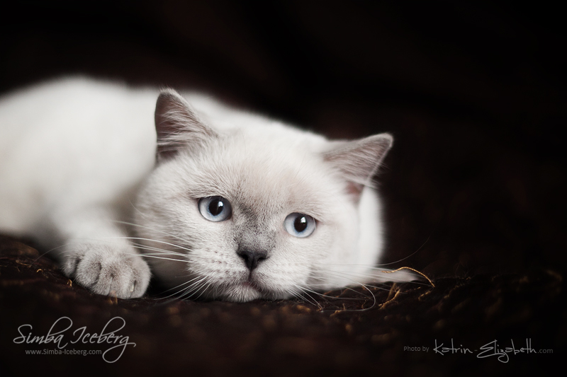 All the world's sadness in her eyes... by Katrin-Elizabeth
