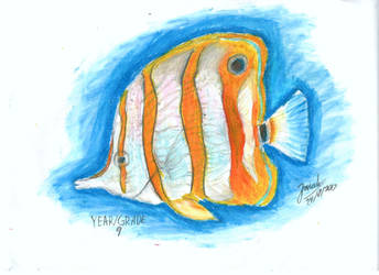 Copper-banded Butterfly fish