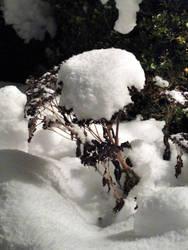 Snow Flower by Aribor