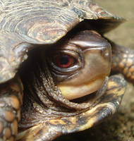 Turtle.... by MarylandParanormal