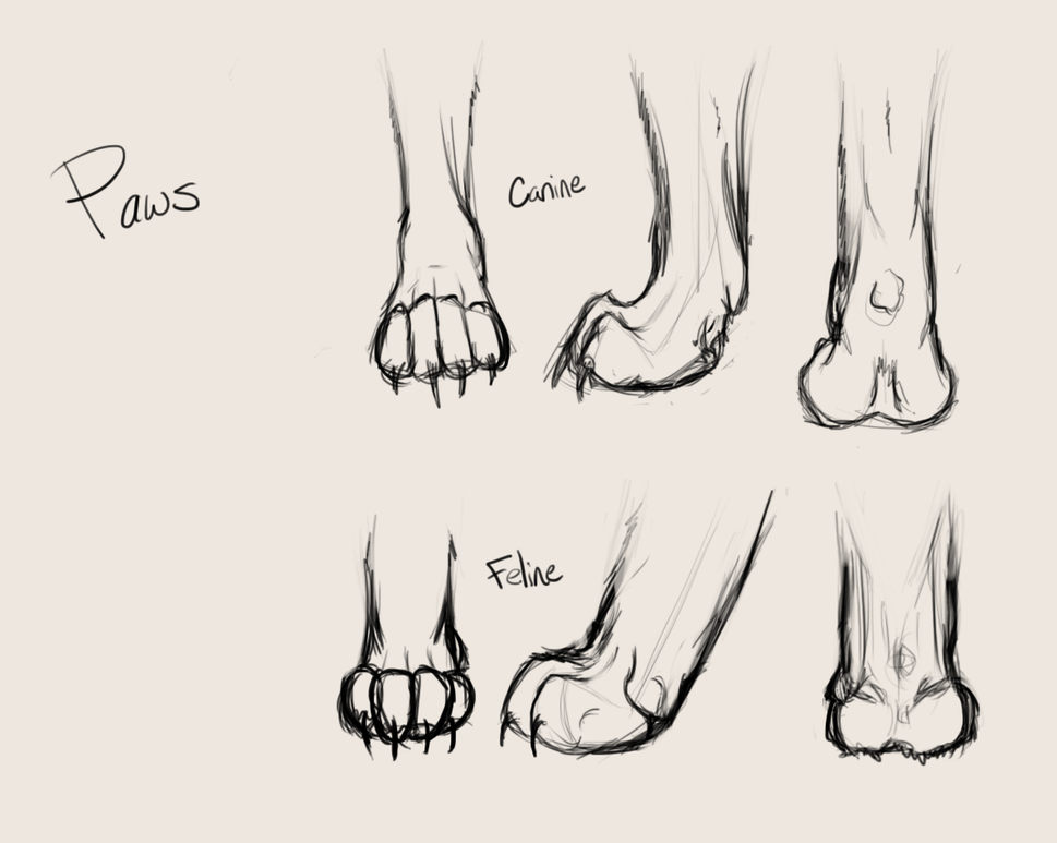 Canine-Feline Paw Study by Dark-Forest-Faerie on DeviantArt