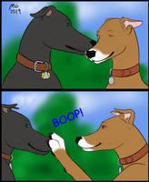 Greyhound boops