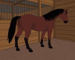 Addler feral horse
