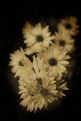 She wears flowers in her hair by corinnemarie