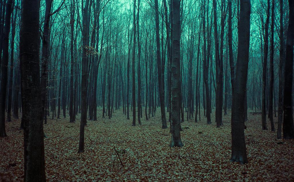 woods by laura-makabresku