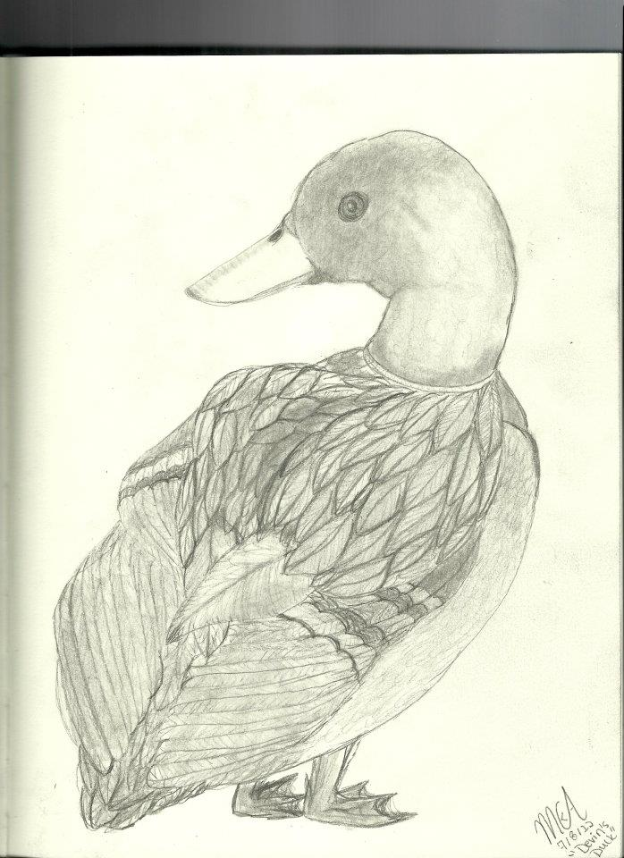 Drake Mallard Drawing (Devin's Duck) by happyfeather on ...