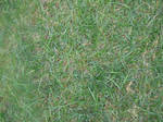 Grassy texture