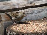Birdie eating