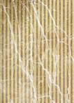 Texture 156