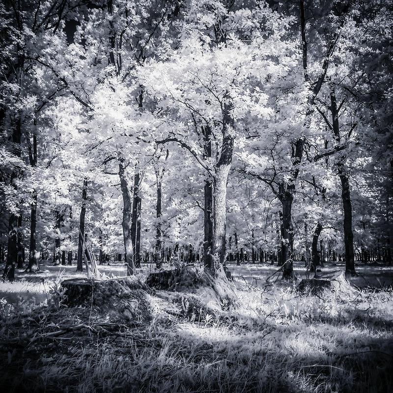 Infrared summer forest by mugurelm