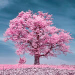 Infrared colors