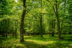 Oak forest