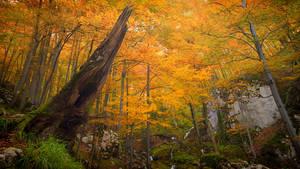 Autumn forest 23