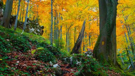 Autumn forest 24