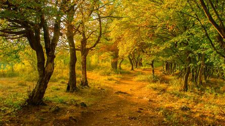 Autumn forest 27