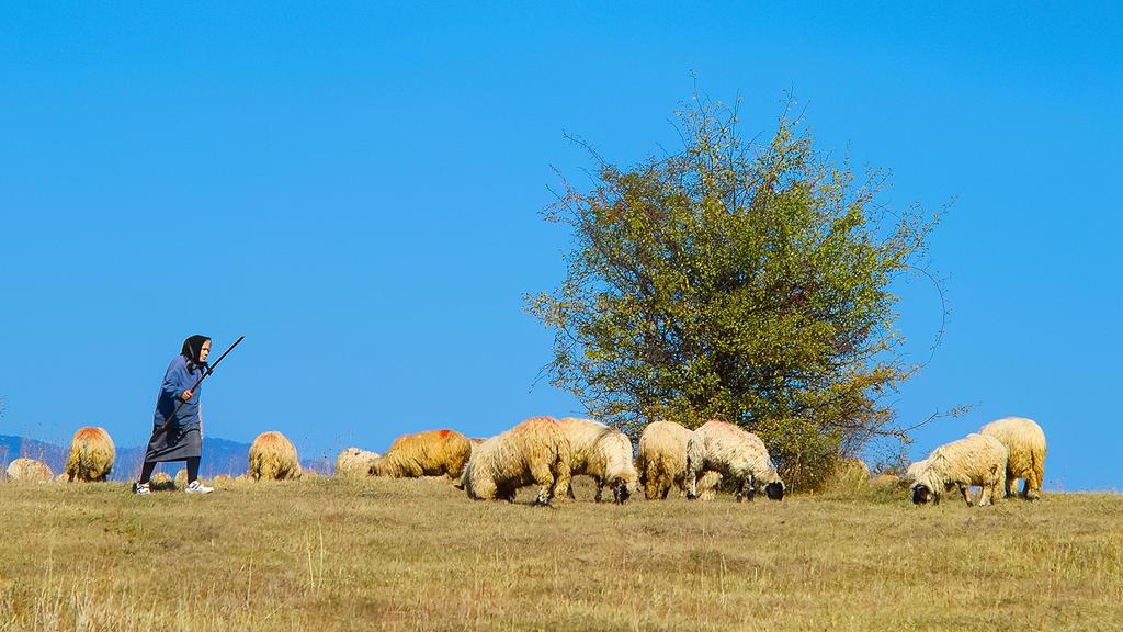 Shepherdess by mugurelm