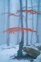 Mountain forest 2 by mugurelm