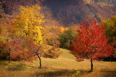Autumn landscape 10 by mugurelm