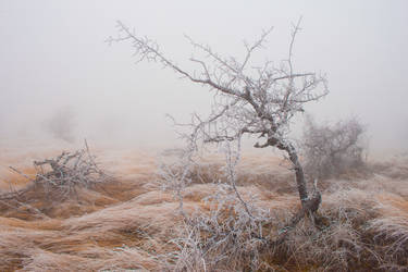 Fog 12 by mugurelm