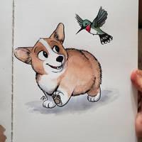 Corgi Puppy and Hummingbird Friend