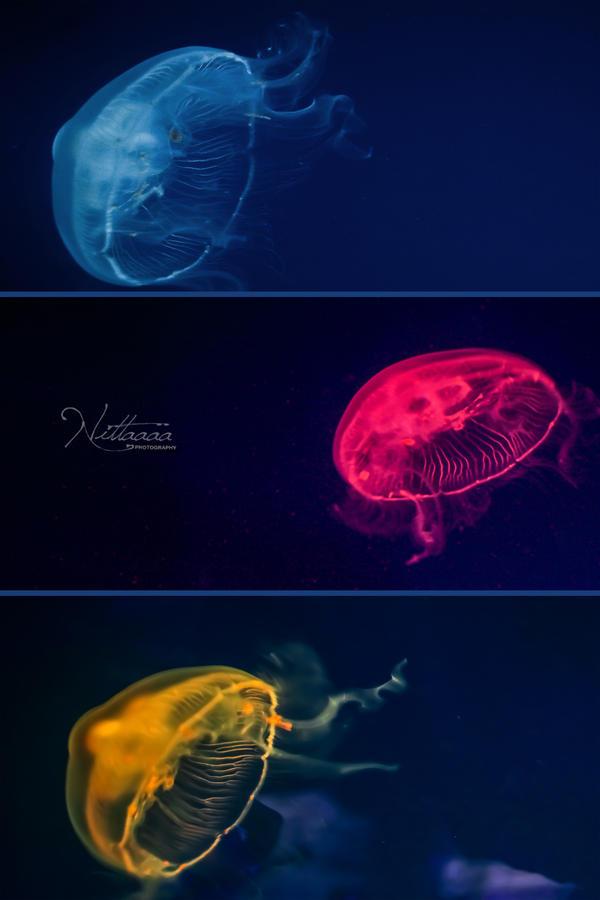 Colorful Jellyfish by Nittaaaa on DeviantArt
