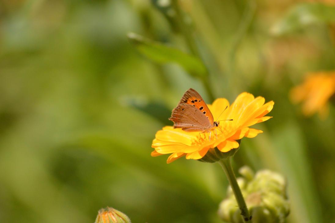 Butterfly by Nittaaaa