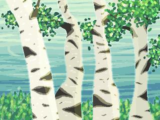 061618 Birch Trees by fvrret