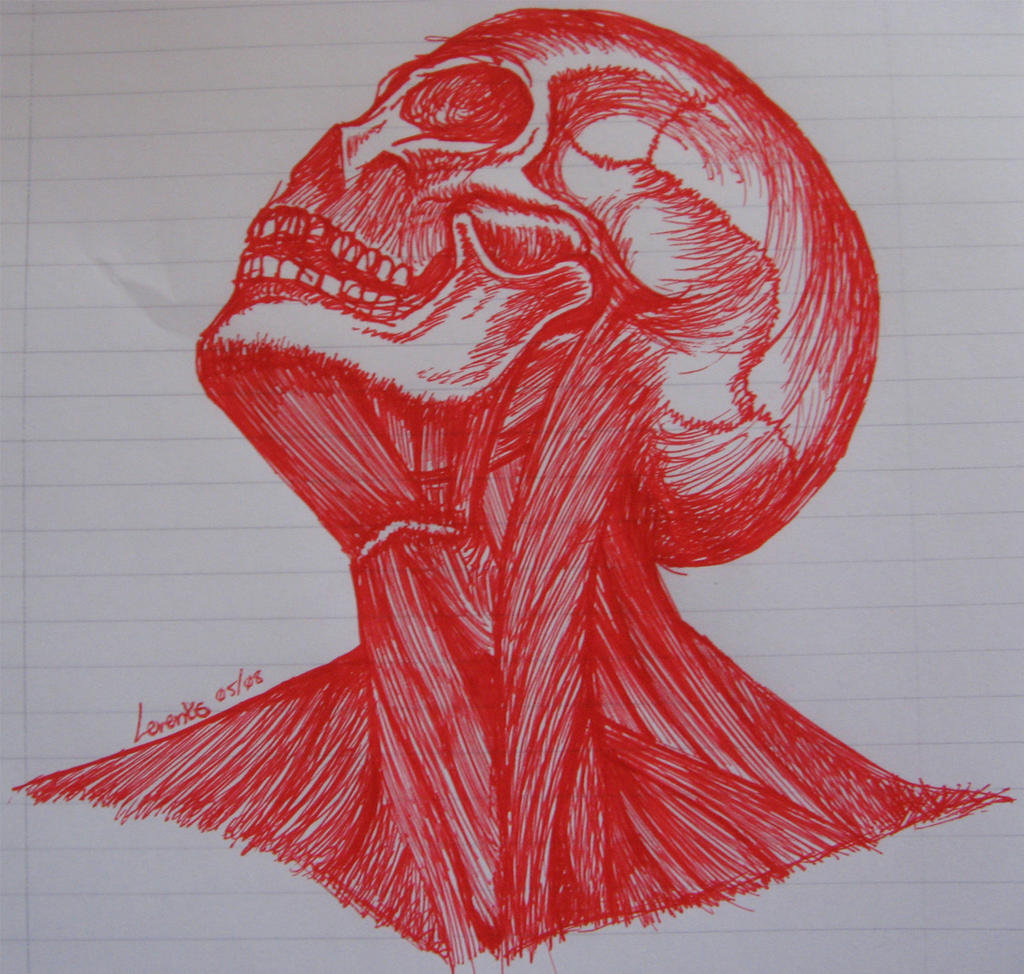 Neckline Drawing : Head and neck muscles by anime cy on deviantart