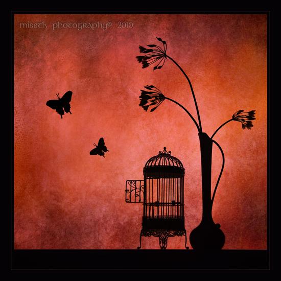 Leptiri Fluttering_journey_by_shatinn-d337hr3