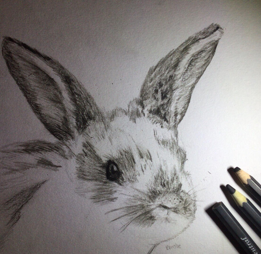Charcoal bunny by VliegendeFiets