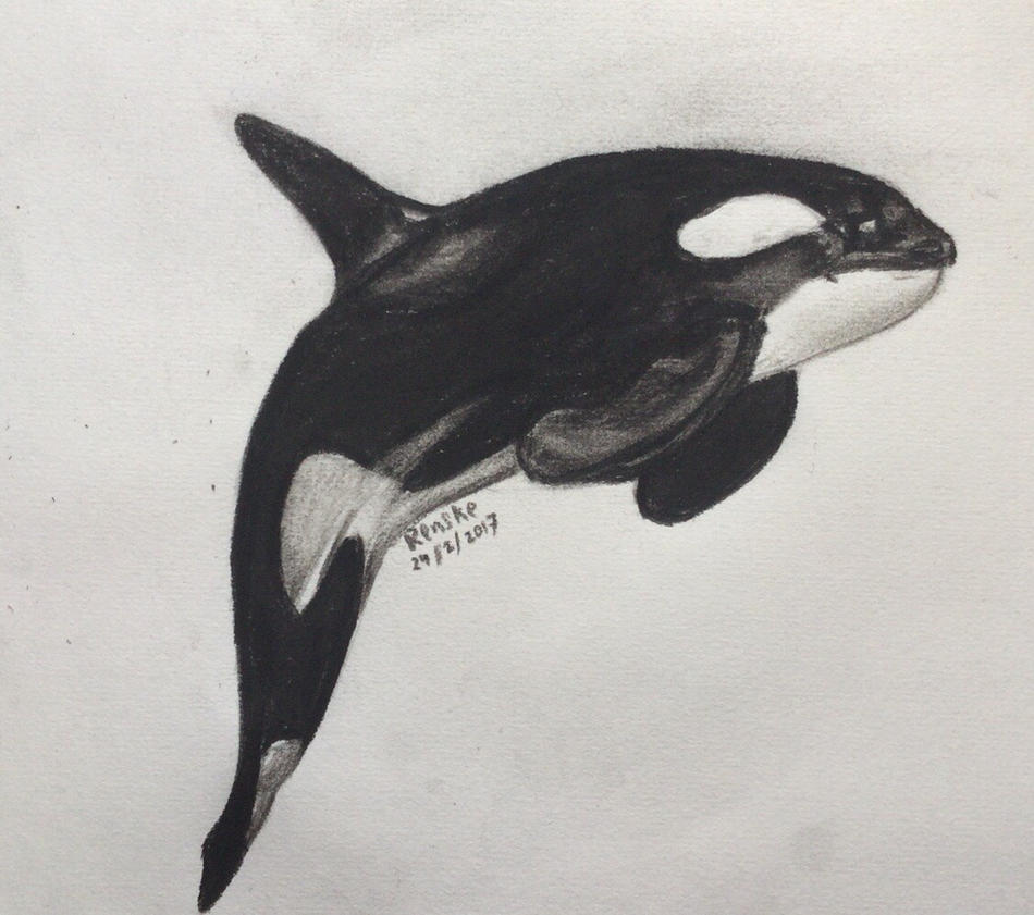 Killer whale (charcoal) by VliegendeFiets