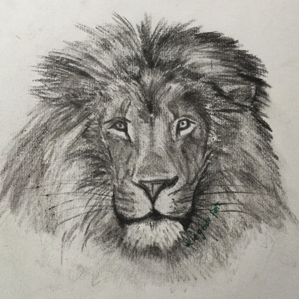 Charcoal lion by VliegendeFiets