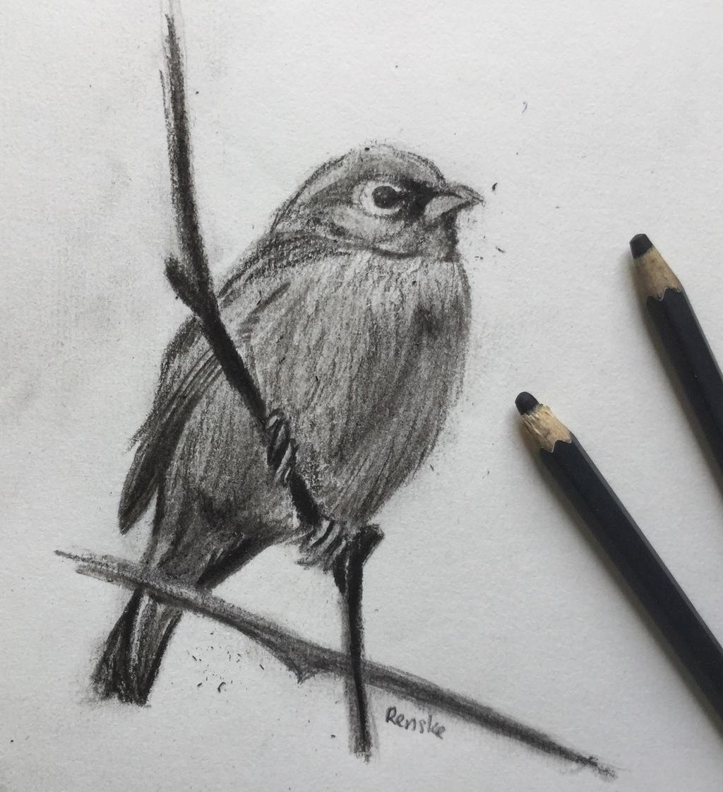 Charcoal Bird by VliegendeFiets