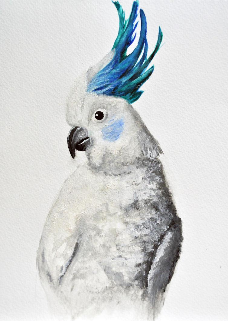 Blue eyed triton cockatoo - photo#24