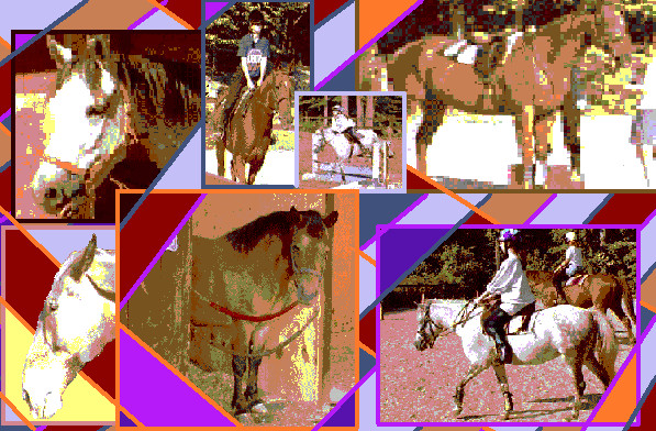 Horses Collaged by Cecilia-Schmitt