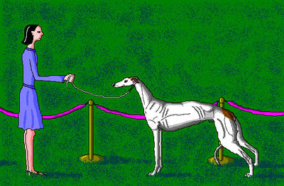 'Dog Show Greyhound' in MS Paint by Cecilia-Schmitt