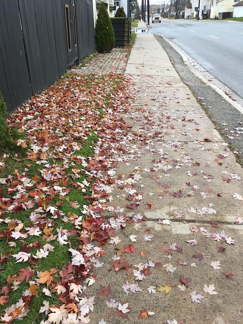 Canadian Fall 2 by LadySakuraAvalon