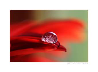 polen drop by naturalselection