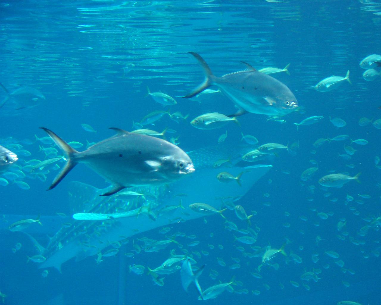 shark aquarium wallpaper amazing wallpapers