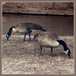 Winged Twins by NightlifeDweller