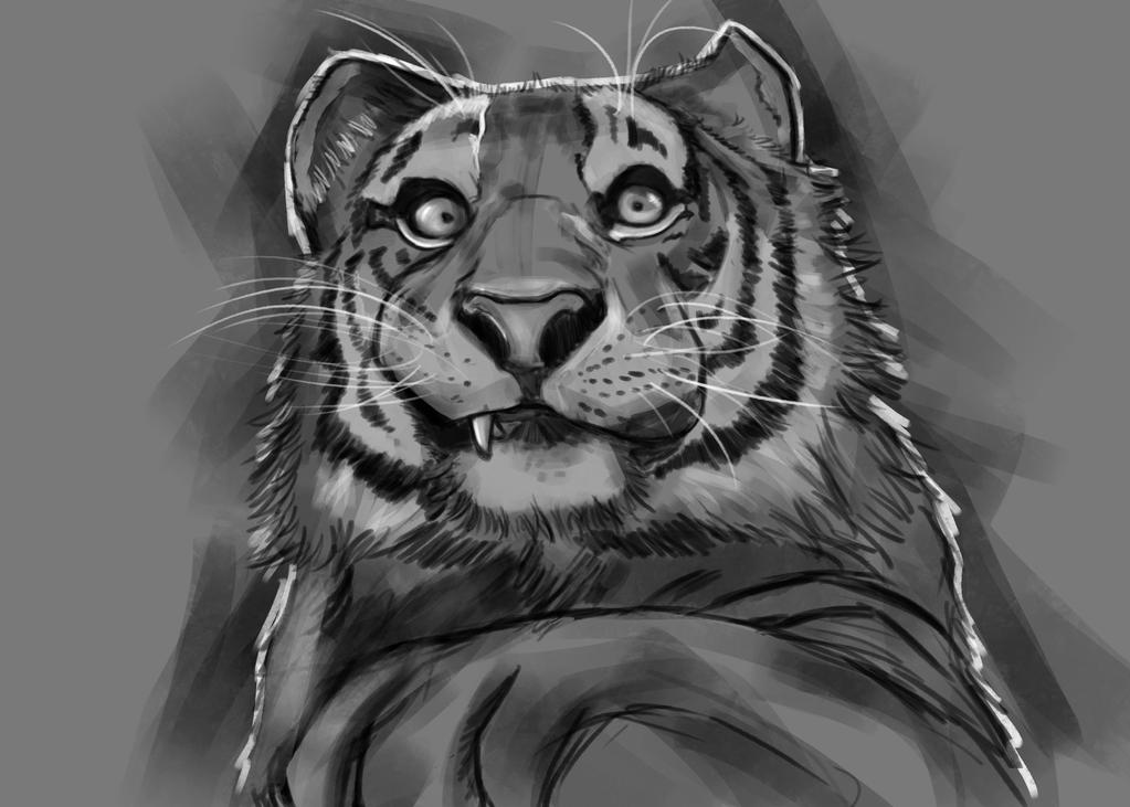 Tiger sketch by hyrelynk