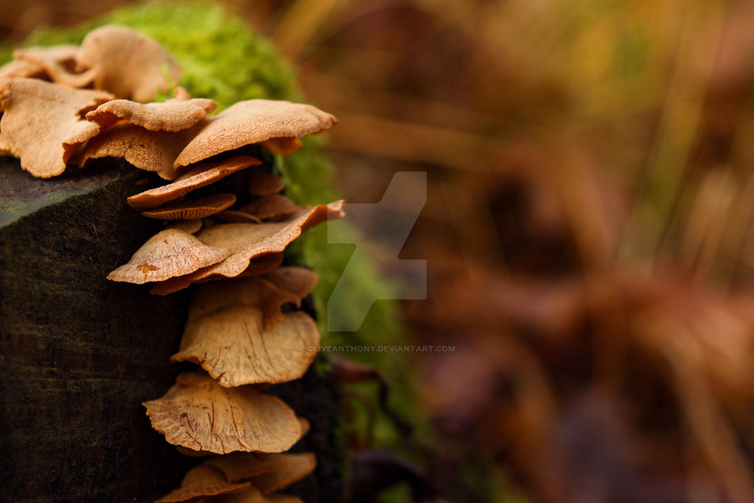 Mushrooms by CliveAnthony