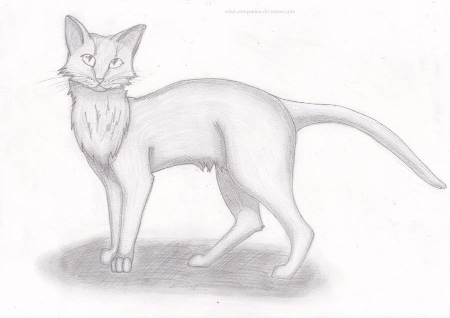 A cat by MidTsumi