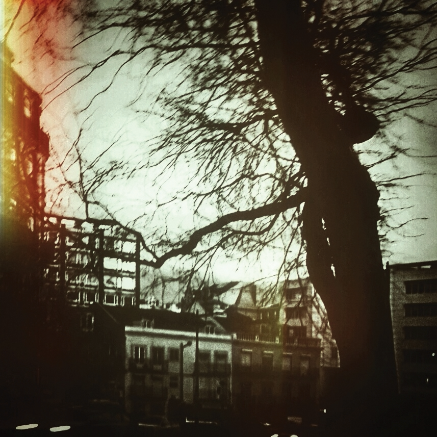 a tree in the city by ruiManuelR